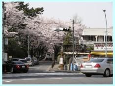 青山霊園:20050408-01