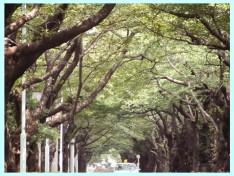 青山霊園20040802-07